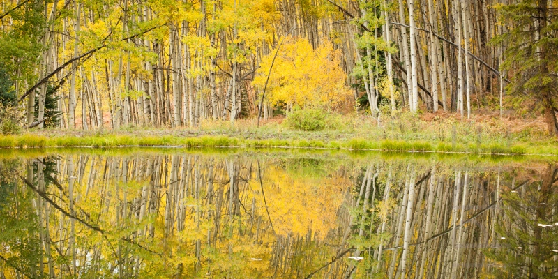 reflections in yellow